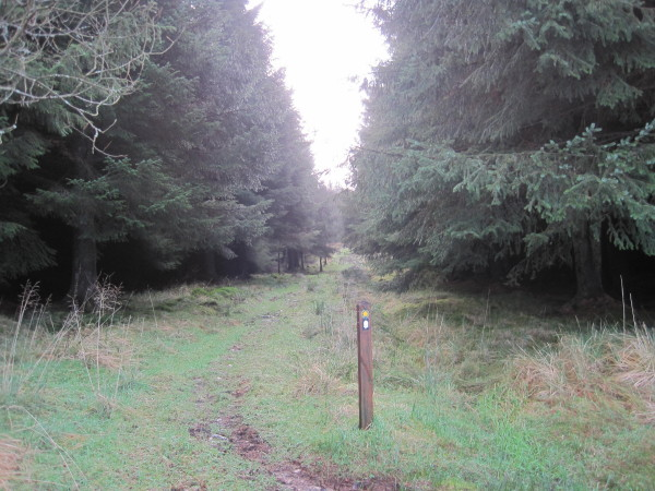 Pennine Way through Wark Forest