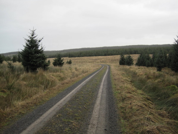 Forest Road, Wark Forest