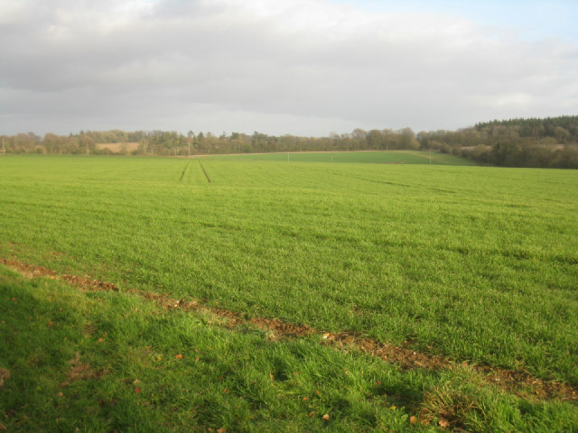 View from Ashe Park Copse
