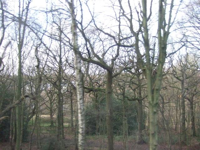 Woodland beside railway
