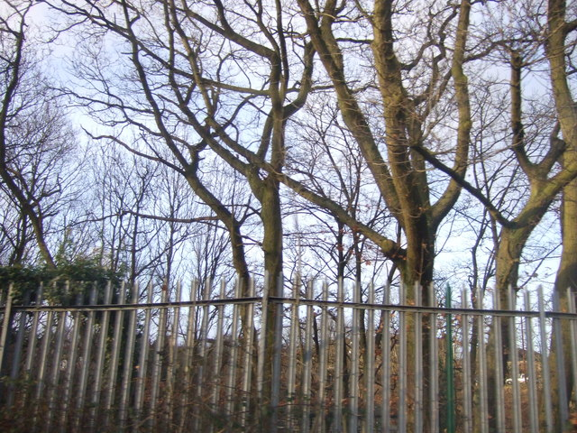 Fence and trees beside railway, Horsforth