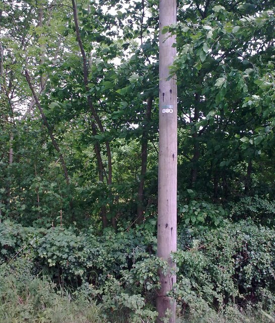 Telephone Pole at Rotten End