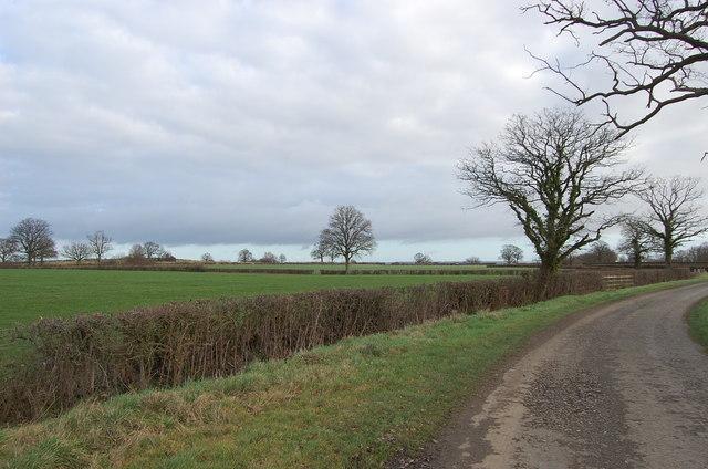 Fields off Pook Lane