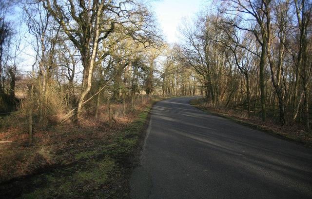 Rural road through owlet plantation