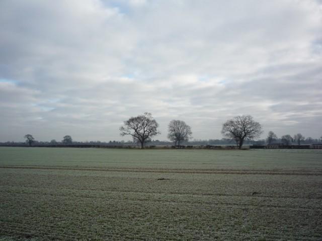 Farmland near Bishopthorpe