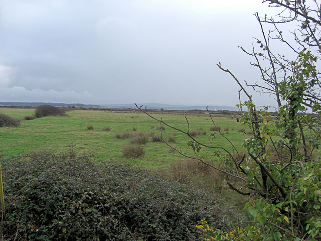 Rough grazing land above Pennington Marshes