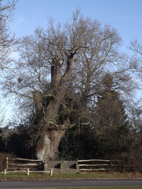 The King's Oak, Tilford