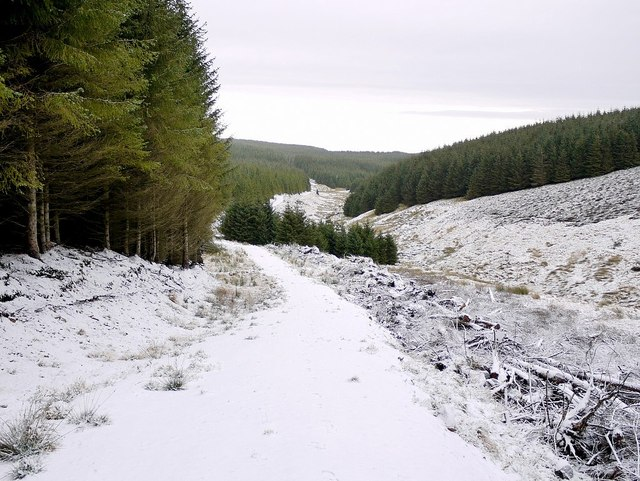 Salter's Road in the forest north of Clay Burn
