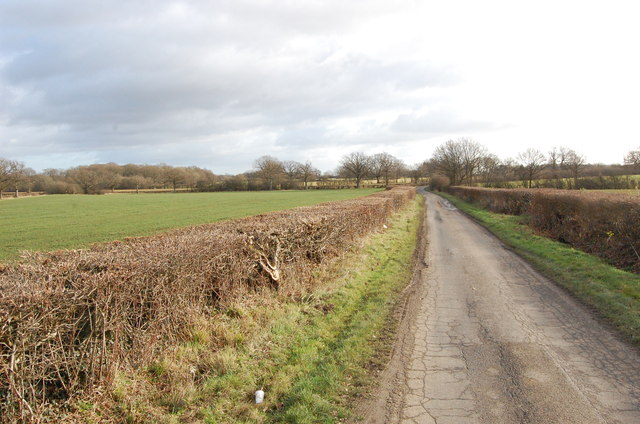 Pook Lane