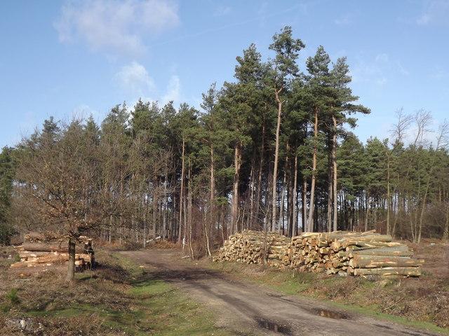 Farnham Heath Regeneration