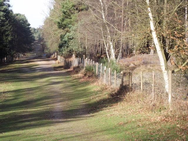 Bridleway on Farnham Heath
