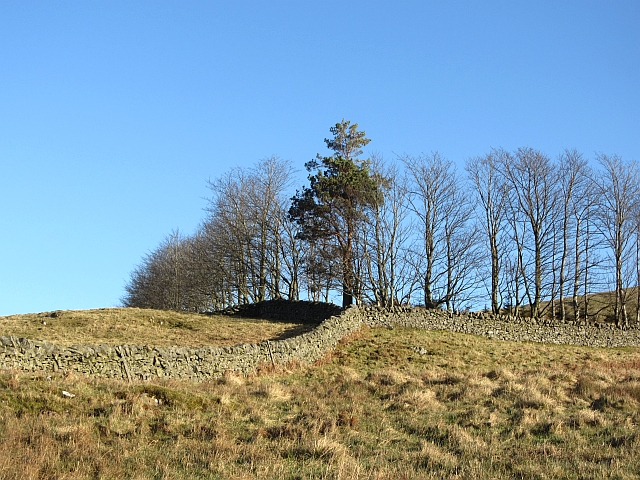 Dykes on Meigle Hill
