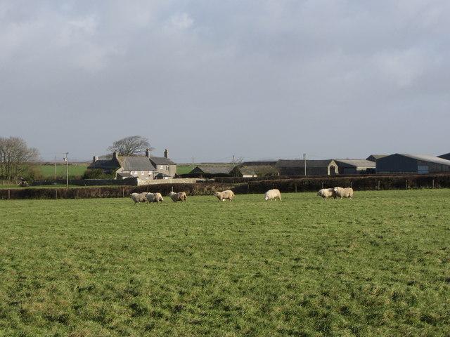 Sheep near East Monkton