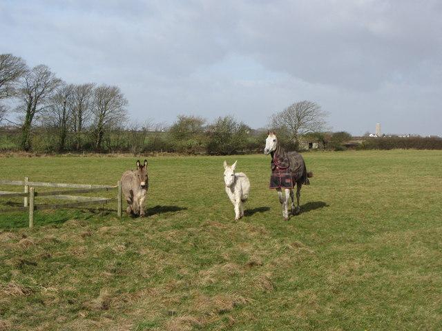 Footpath guardians near West Monkton