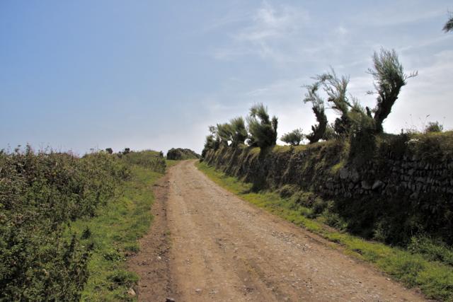 Green Lane Lizard Point
