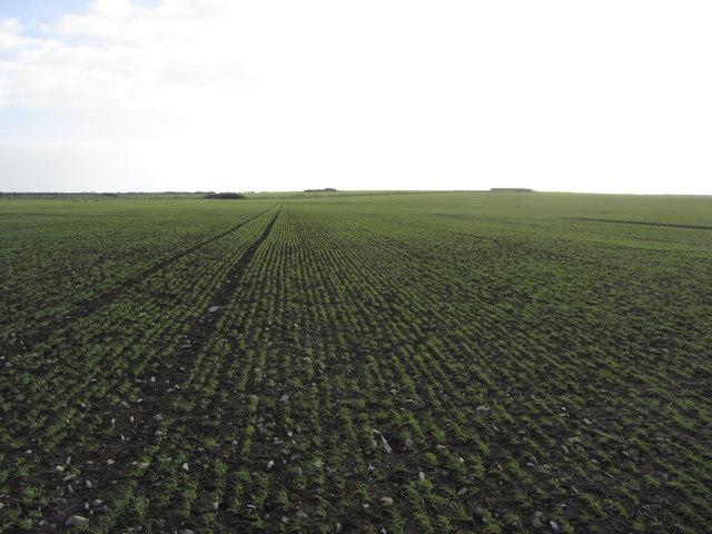 Planted fields near Cwm Bach