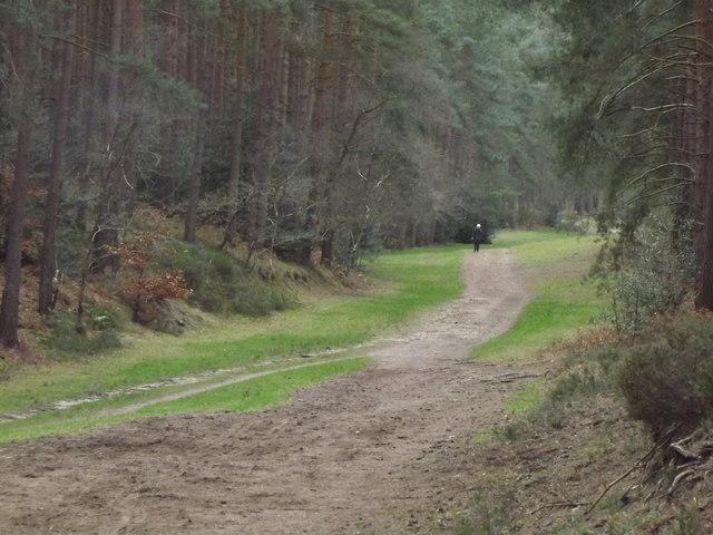 Woodland Path, Farnham Heath