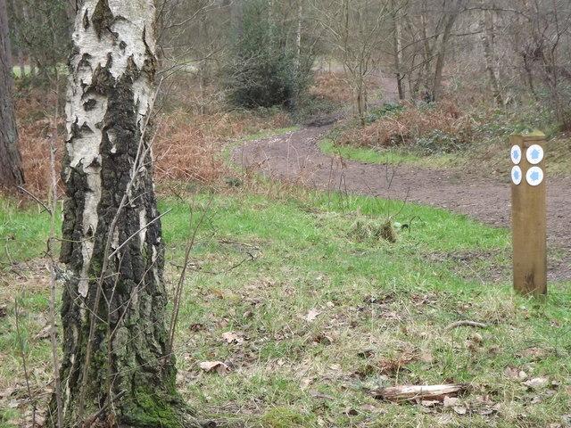 Woodland Path on Farnham Heath