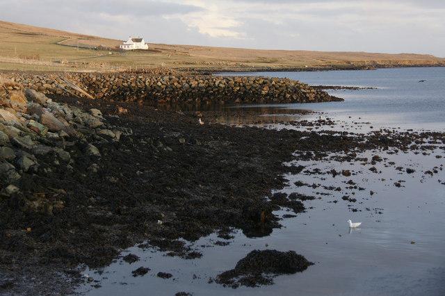 Coastline east of Baltasound pier