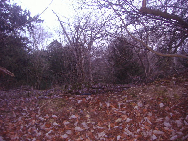 Woods by White Downs Lane