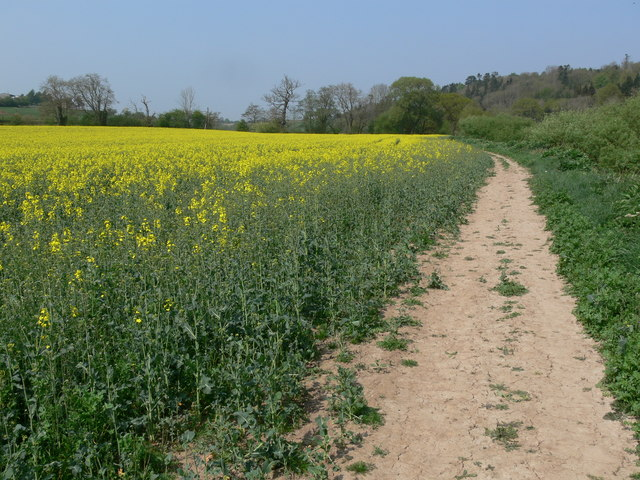 The Severn Way north of Hampton Loade