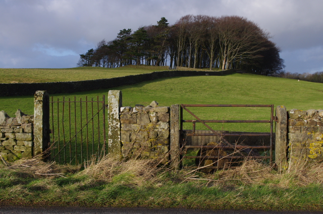 Roadside gateways near Aughton