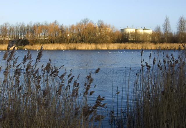 Oak Road park fishing pond, Hull