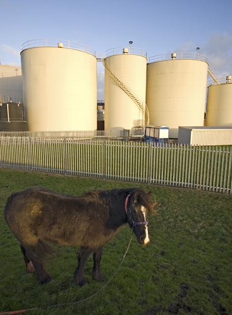 Tanks, pony, by the Hull