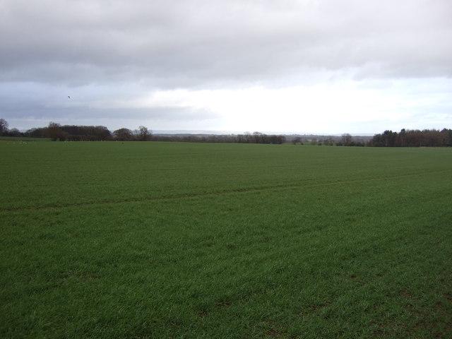 Farmland, Bishop Monkton Moor