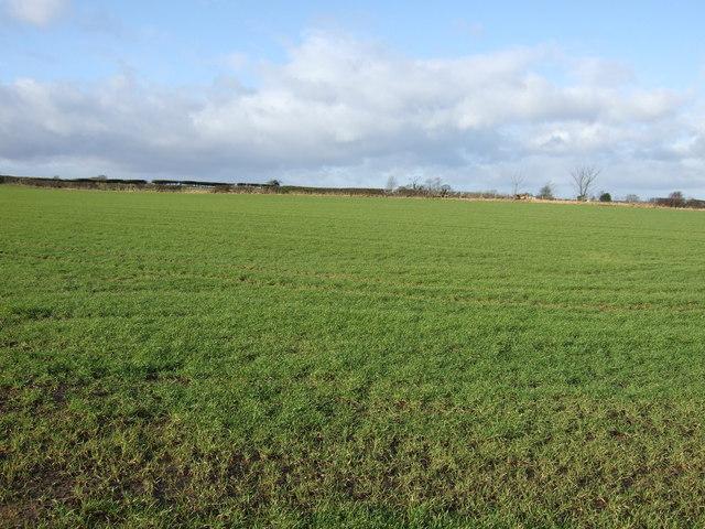 Farmland off the A61
