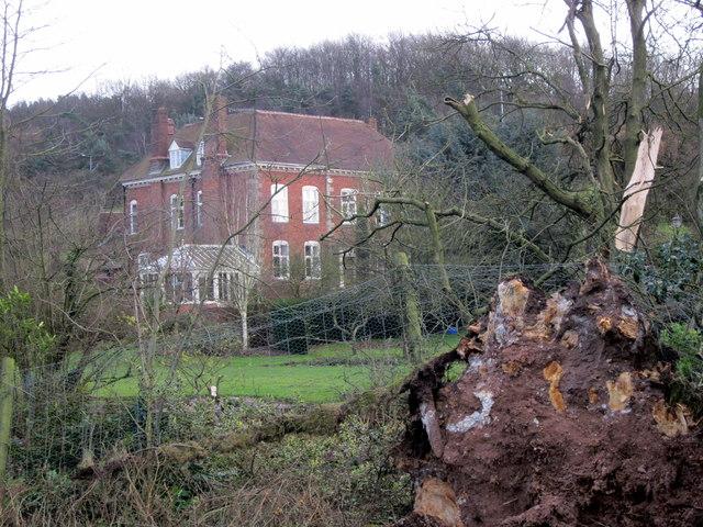 Freshly Fallen Tree, Chadwich Manor NT