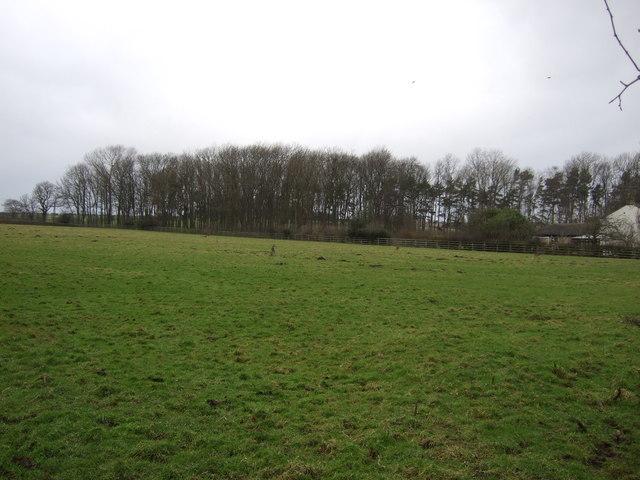 Farmland, Woodlands