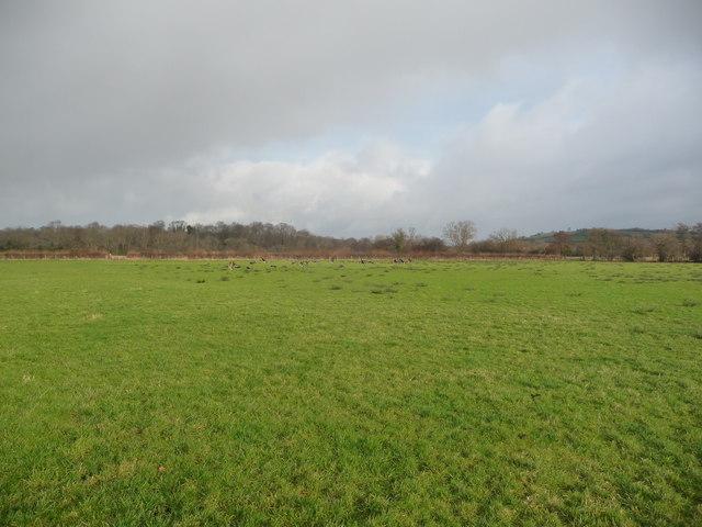 Meadows near Llangorse Lake in January