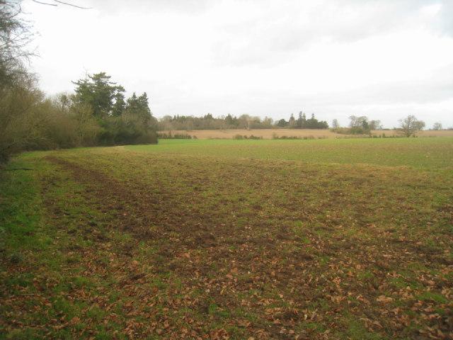 Wooded field margin