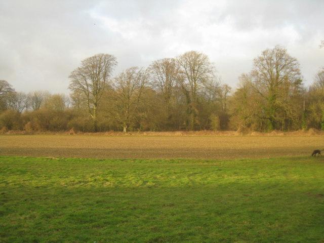 Woodland in Oakley Park