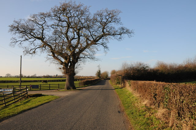 Oak tree on Pulley Lane