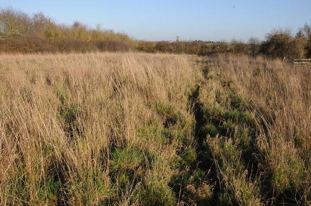 Rough grazing near Pulley Farm