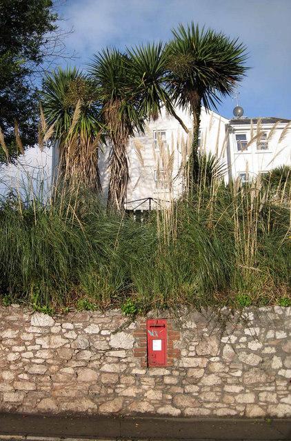 Post box, pampas and palms