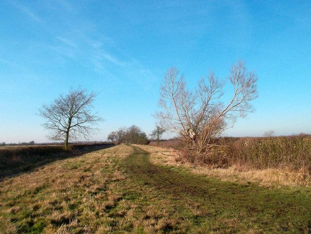 Bridleway to Oddington