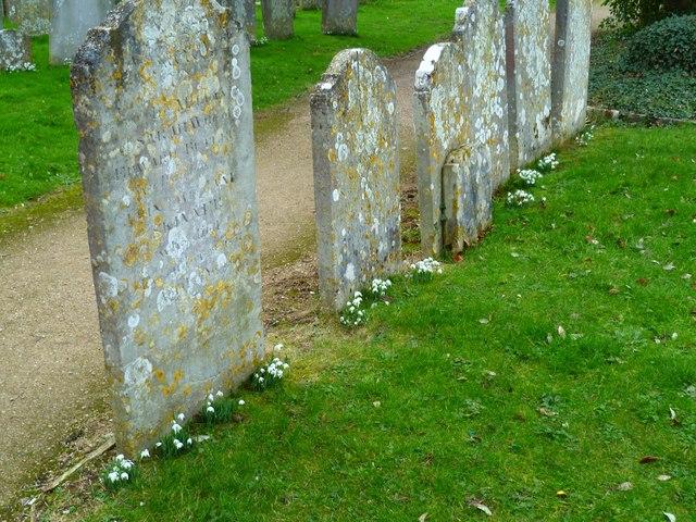 Snowdrops by the gravestones in Sidlesham