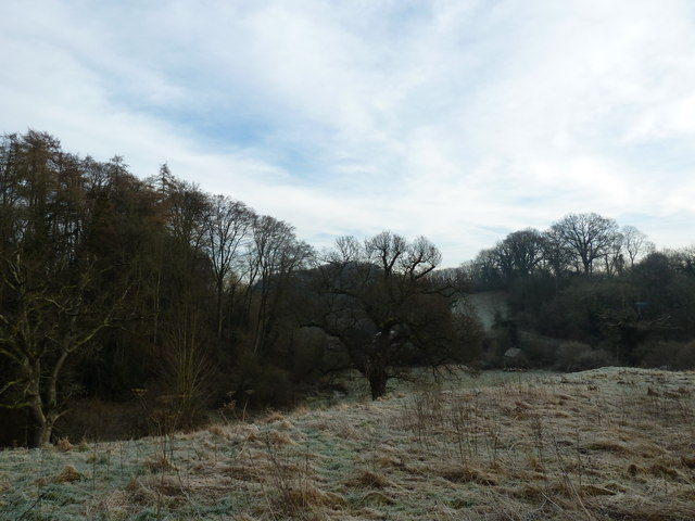 A chilly dell at Selborne