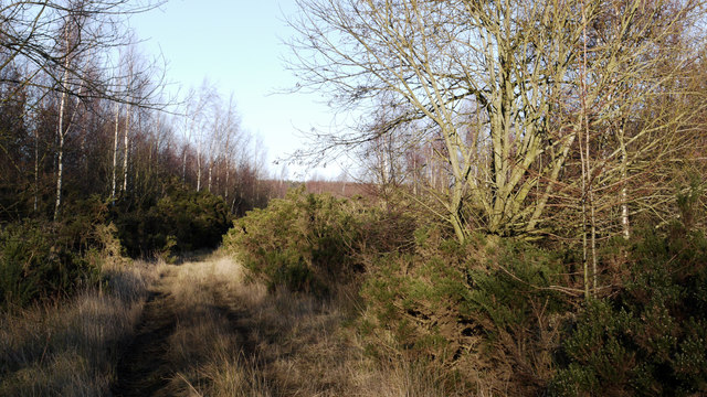 Forestry track and footpath east of Stanley Crook