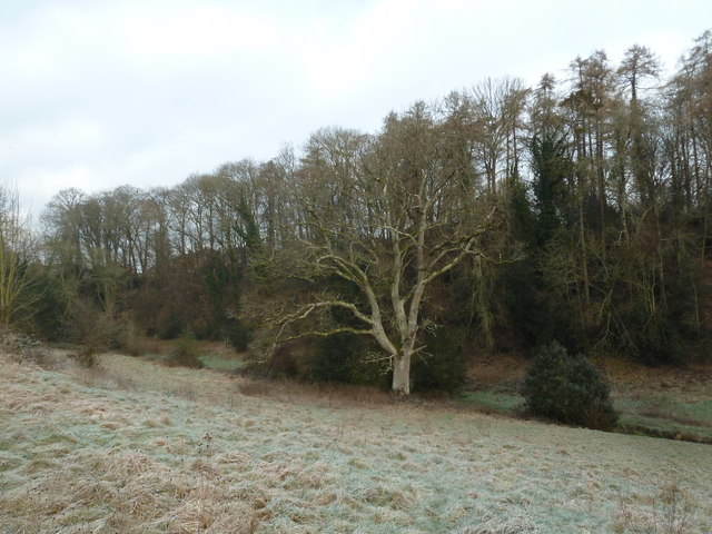 Stark winter tree in Church Meadow