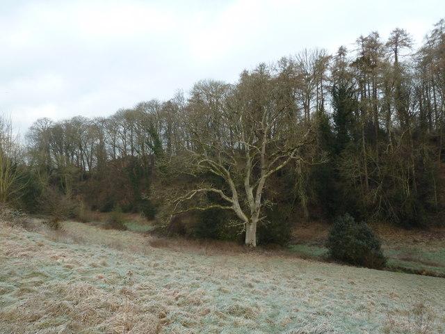 Stark winter tree in Church Meadow