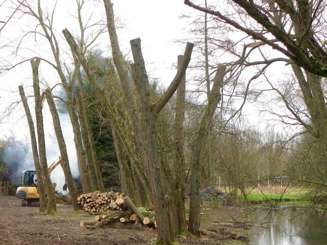 Woodland clearance, Broad Chalke