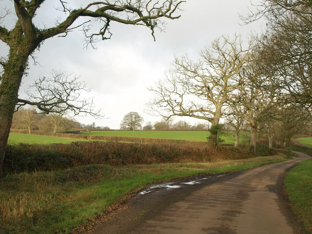 Lane near Hayes Barton