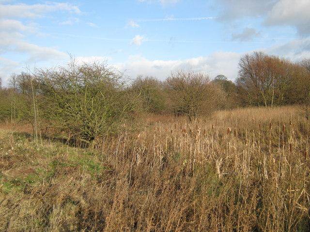 Wild marshy Castle Bromwich