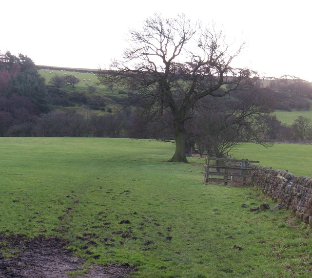 Bridleway to Horn Bank