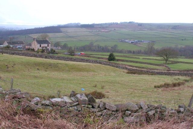 Hillside at Holly Tree Farm