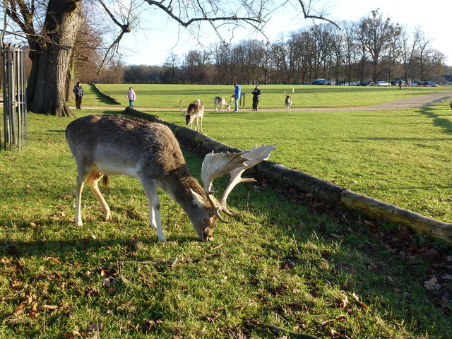 Deer in the grounds of Burghley House, Stamford